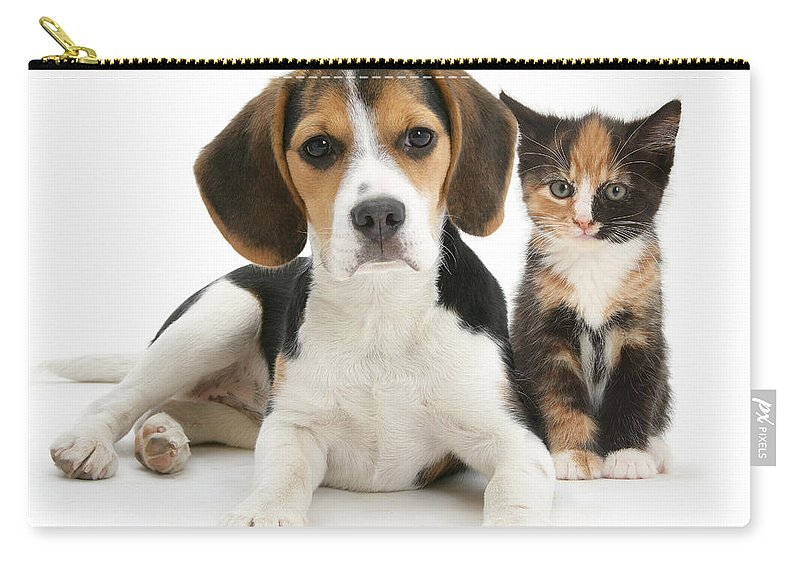 Animal Carry-all Pouch featuring the photograph Beagle And Calico Cat by Mark Taylor