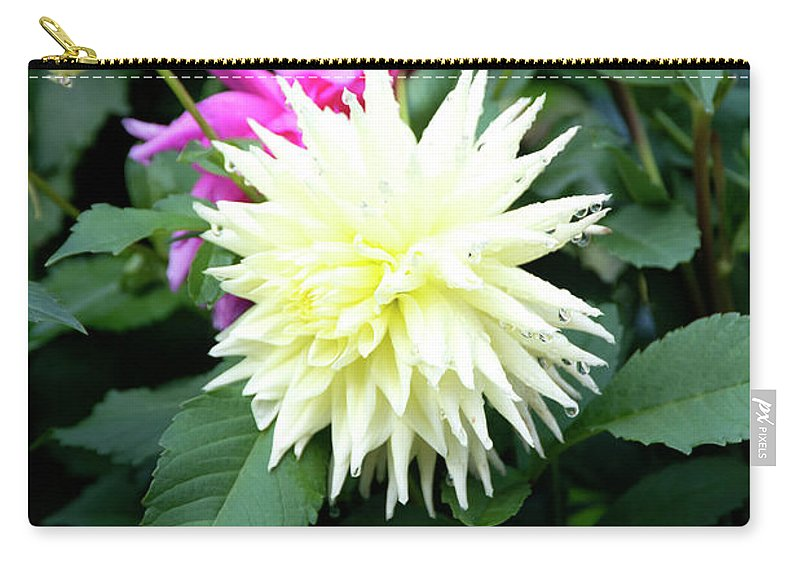 Outdoor Carry-all Pouch featuring the photograph Beautiful And Fresh Dahlias In The Butchrt Gardens,vancouver Island 2. by Andrew Kim