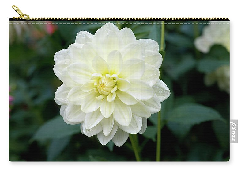 Outdoor Carry-all Pouch featuring the photograph Beautiful And Fresh Dahlias In The Butchrt Gardens,vancouver Island 3. by Andrew Kim