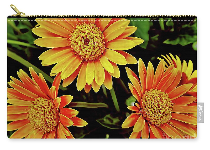 Daisy Carry-all Pouch featuring the photograph Beautiful Daisies by D Hackett
