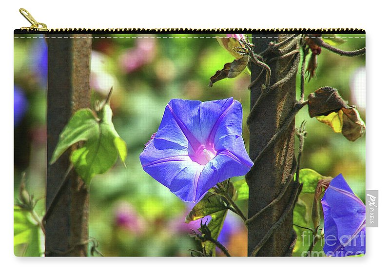 Beautiful Radiating Vine Flower Carry-all Pouch featuring the photograph Beautiful Railroad Vine Flower by Mariola Bitner