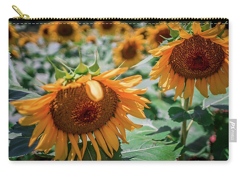 Sun Carry-all Pouch featuring the photograph Beautiful Sunflower Field In South Carolina by Alex Grichenko