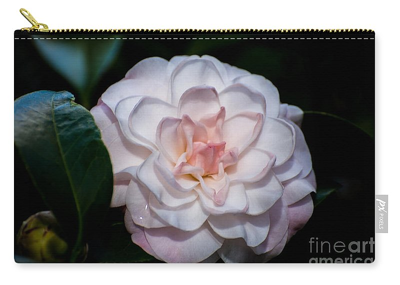 Flora Carry-all Pouch featuring the photograph Beautiful White Camellia by Zina Stromberg