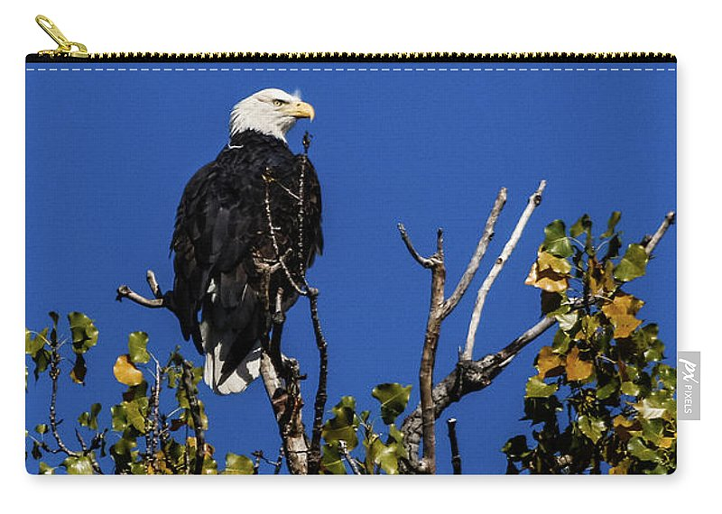 Eagle Carry-all Pouch featuring the photograph Beauty Of The Bald Eagle by Terri Morris