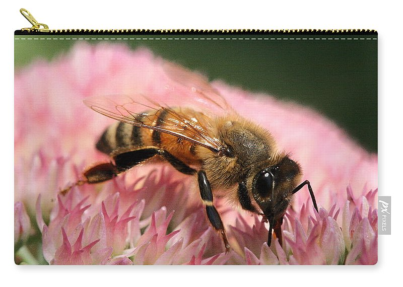 Bee Carry-all Pouch featuring the photograph Bee On Flower 6 by Angela Rath