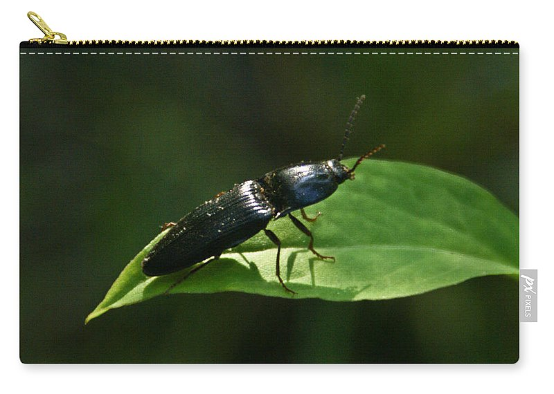 Beetle Carry-all Pouch featuring the photograph Beetle At Sunrise by Douglas Barnett