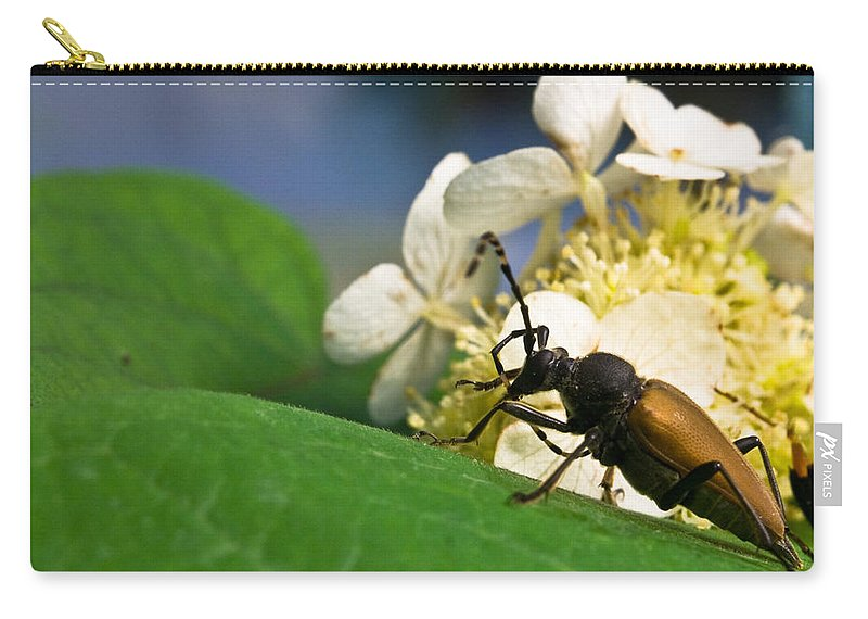 Crossville Carry-all Pouch featuring the photograph Beetle Preening by Douglas Barnett