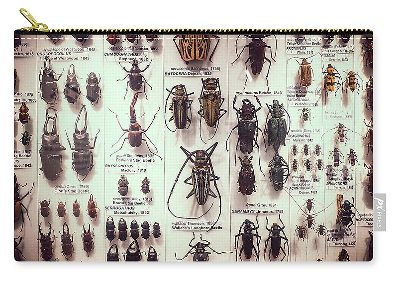 Beetles Carry-all Pouch featuring the photograph Beetles by David Ridley