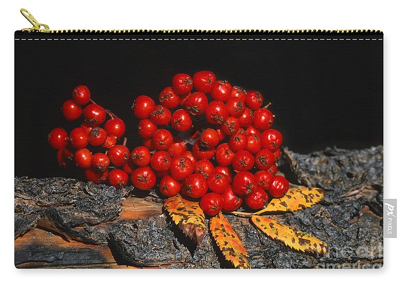 Grand Teton Carry-all Pouch featuring the photograph Berries And Bark by Sandra Bronstein