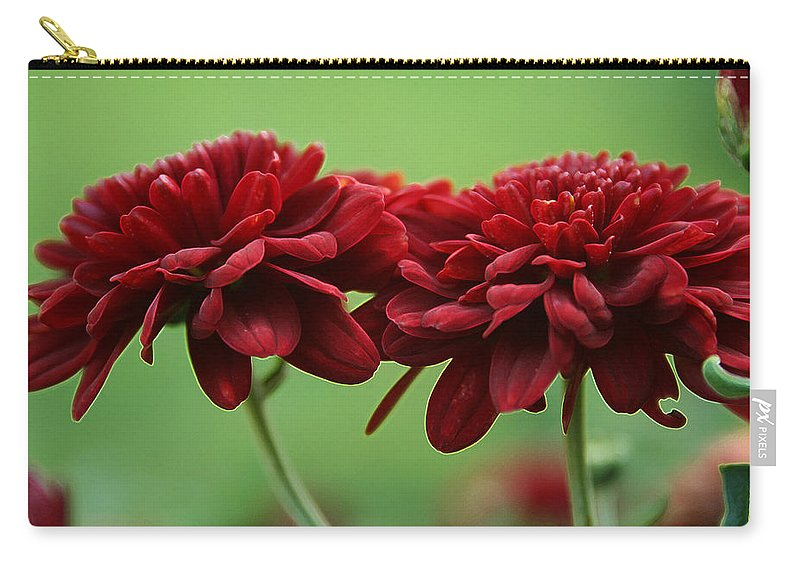 Best Friends Carry-all Pouch featuring the photograph Best Friends by Linda Sannuti