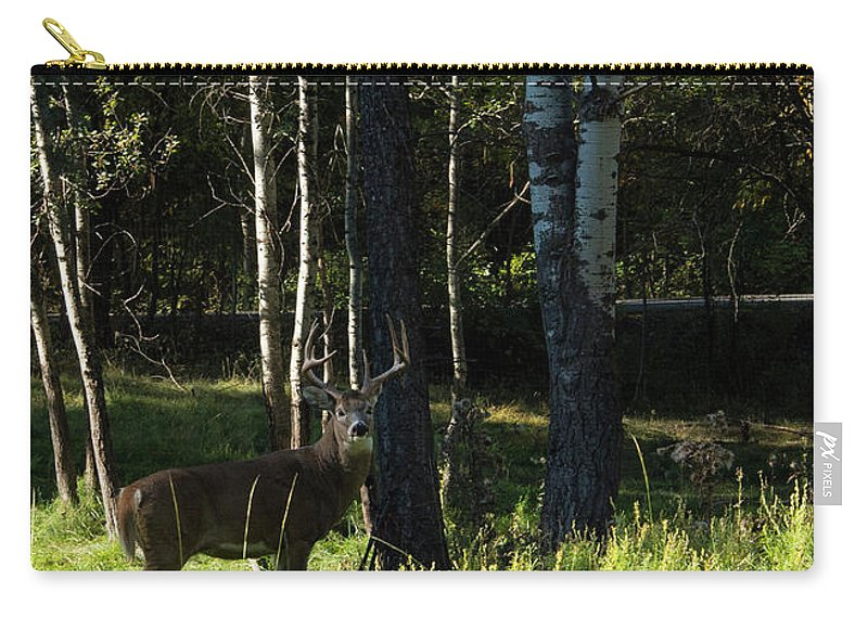 Deer Carry-all Pouch featuring the photograph Big Buck by Roy Nierdieck