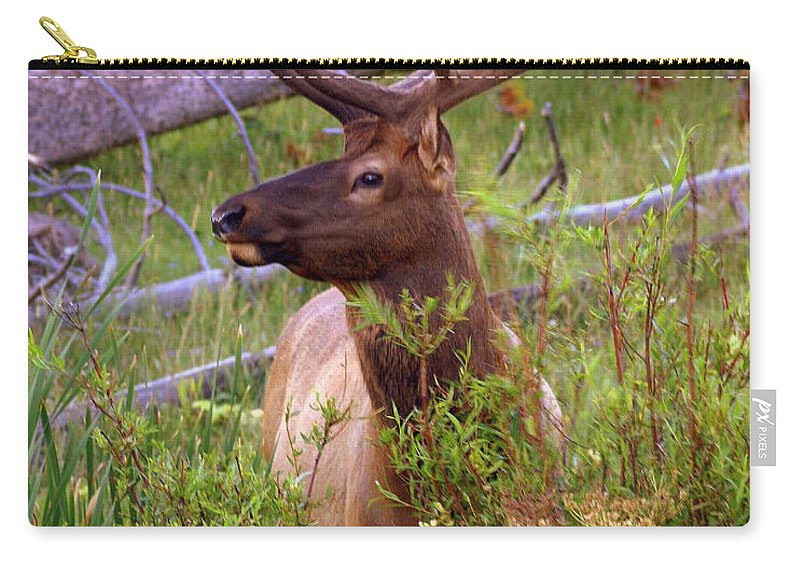 Bull Elk Carry-all Pouch featuring the photograph Big Bull by Marty Koch
