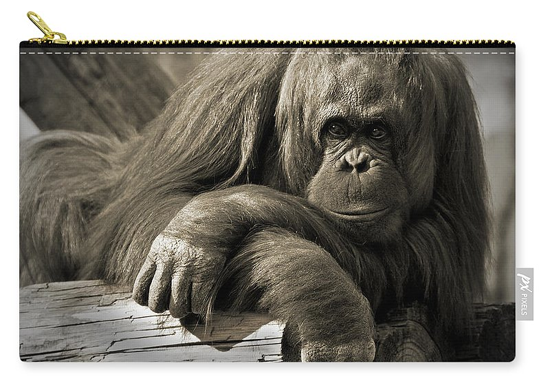 Orangutang Carry-all Pouch featuring the photograph Big Hands II by Steven Sparks