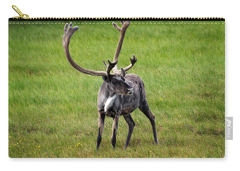 Caribou Carry-all Pouch featuring the photograph Big Horn by Anthony Jones