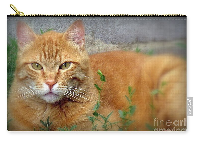 Nacho. The Big Orange Cat. Photographed At Home On June 28th 2016. Carry-all Pouch featuring the photograph Big O by Krista Carofano