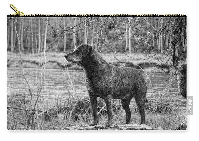 Dog Carry-all Pouch featuring the photograph Big Red by Donna Blackhall