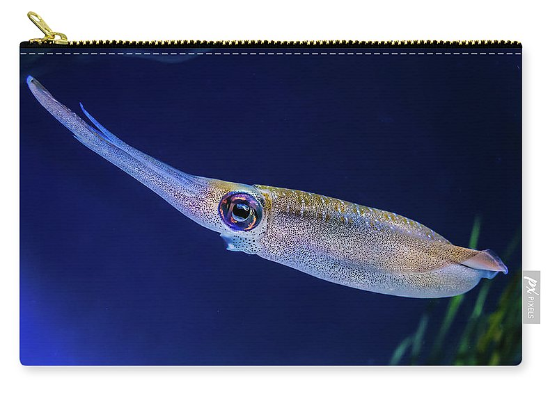 Aquatic Carry-all Pouch featuring the photograph Bigfin Reef Squid by David A Litman