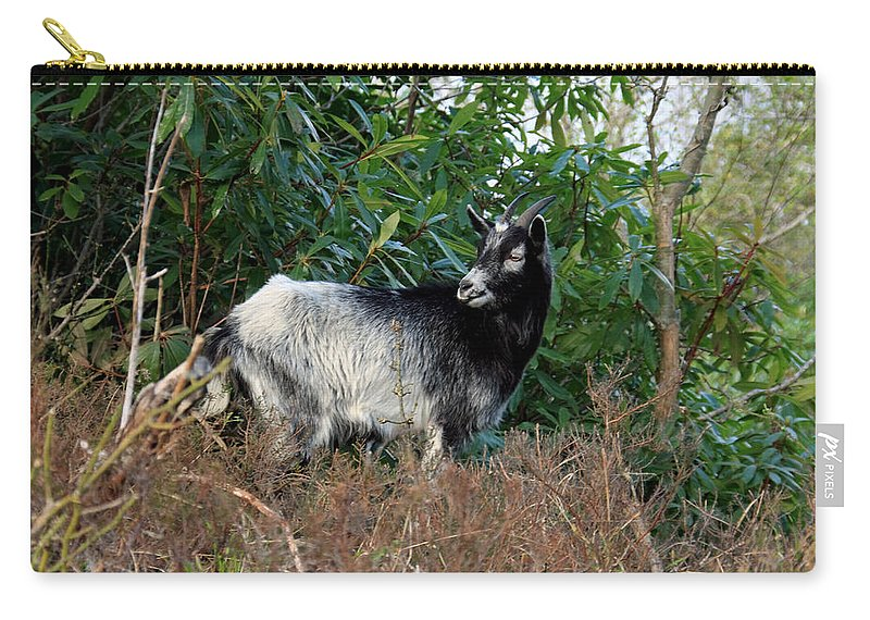 Goat Carry-all Pouch featuring the photograph Kerry Mountain Goat by Aidan Moran