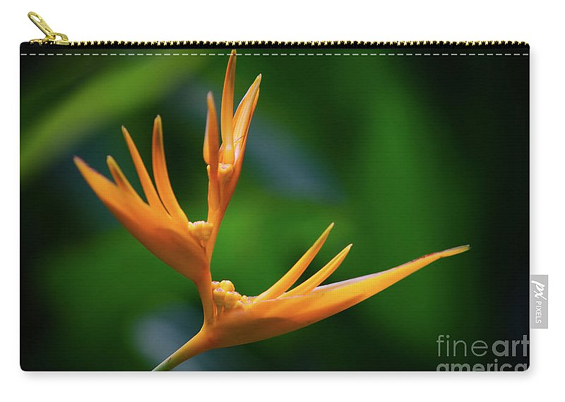 Bird Of Paradise Carry-all Pouch featuring the photograph Bird Of Paradise by Doug Sturgess