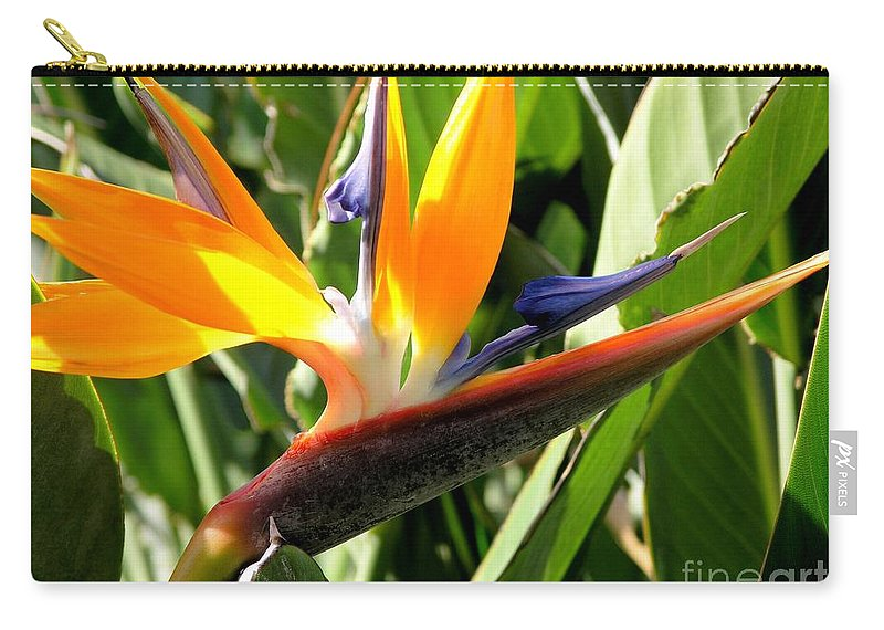 Bird Of Paradise Carry-all Pouch featuring the photograph Bird Of Paradise by Mary Deal