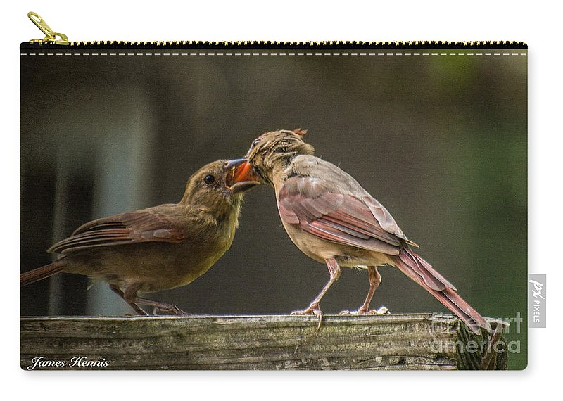 Cardinal Carry-all Pouch featuring the photograph Bird Parenting by James Hennis