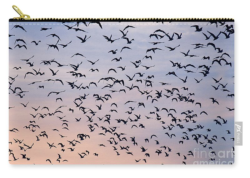 Numerous Carry-all Pouch featuring the photograph Birds A Flock Of Seagulls by John Harmon
