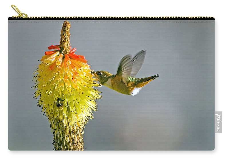 Hummingbird Carry-all Pouch featuring the photograph Birds And Bees by Mike Dawson