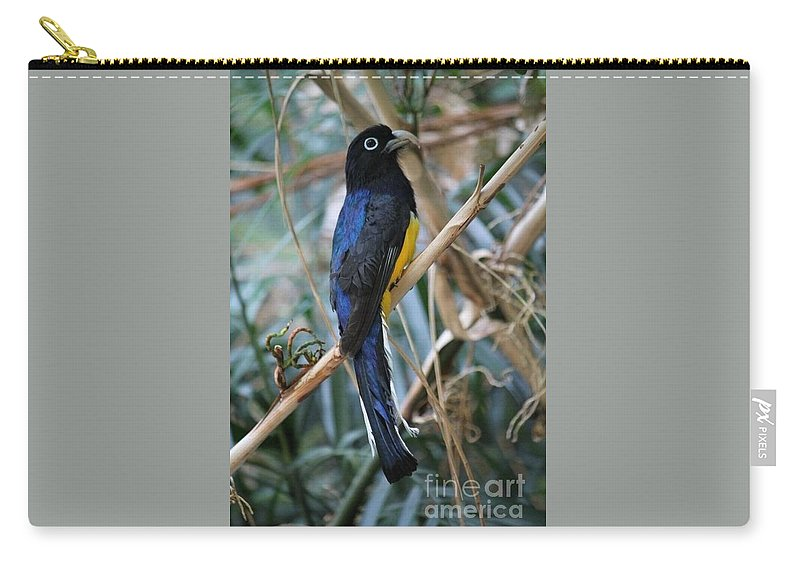 Bird Carry-all Pouch featuring the photograph Birdy by Katherine Ruth