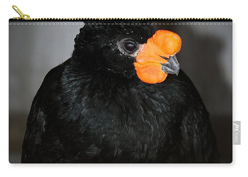 Bird Carry-all Pouch featuring the photograph Black And Orange by Cynthia Guinn