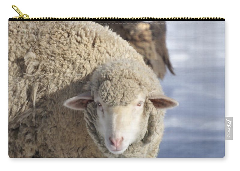 Sheep Carry-all Pouch featuring the photograph Black And White by Heather Coen