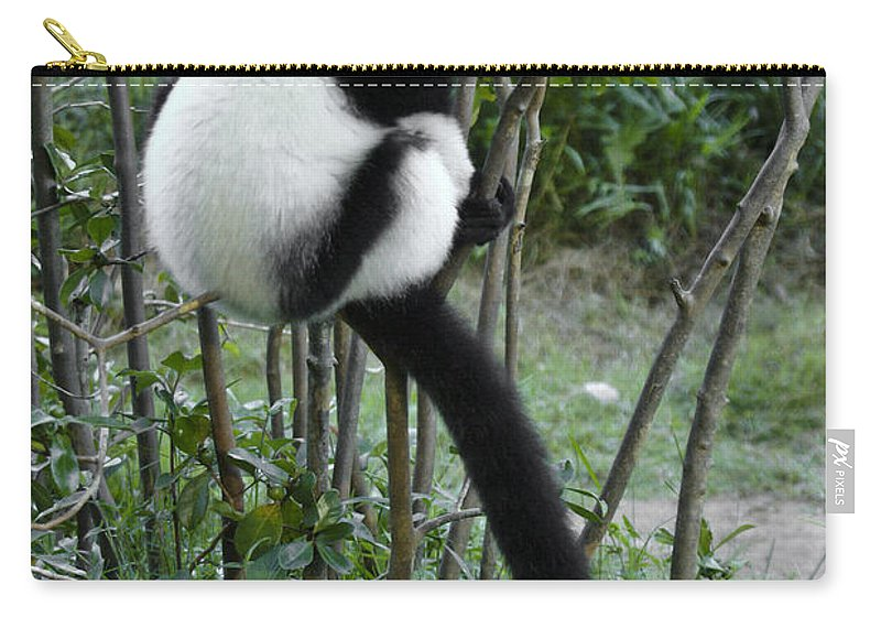 Madagascar Carry-all Pouch featuring the photograph Black And White Ruffed Lemur by Michele Burgess