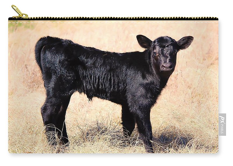 Calf Carry-all Pouch featuring the photograph Black Angus Baby Calf by Jeanie Mann