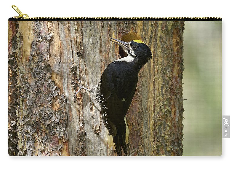 Bird Carry-all Pouch featuring the photograph Black-backed Woodpecker by Doug Herr