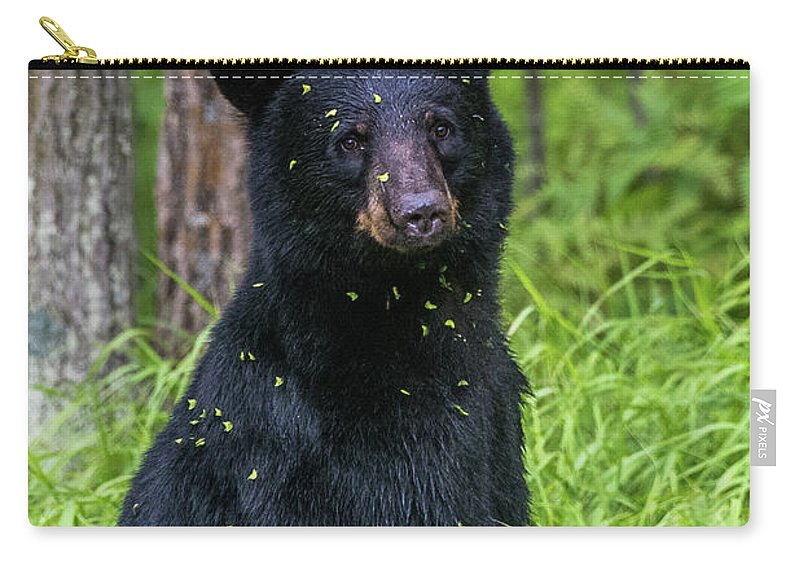 Black Bear Carry-all Pouch featuring the photograph Black Bear by Paul Freidlund
