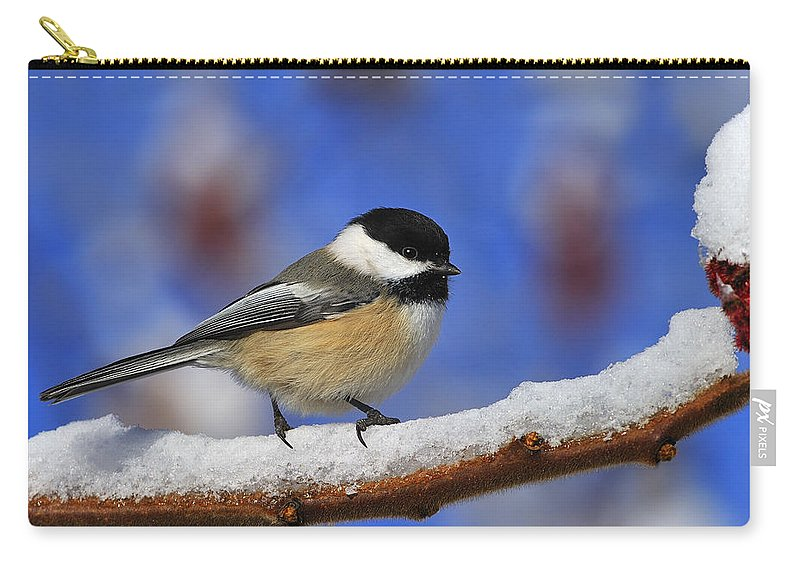 Staghorn Sumac Carry-all Pouch featuring the photograph Black-capped Chickadee In Sumac by Tony Beck