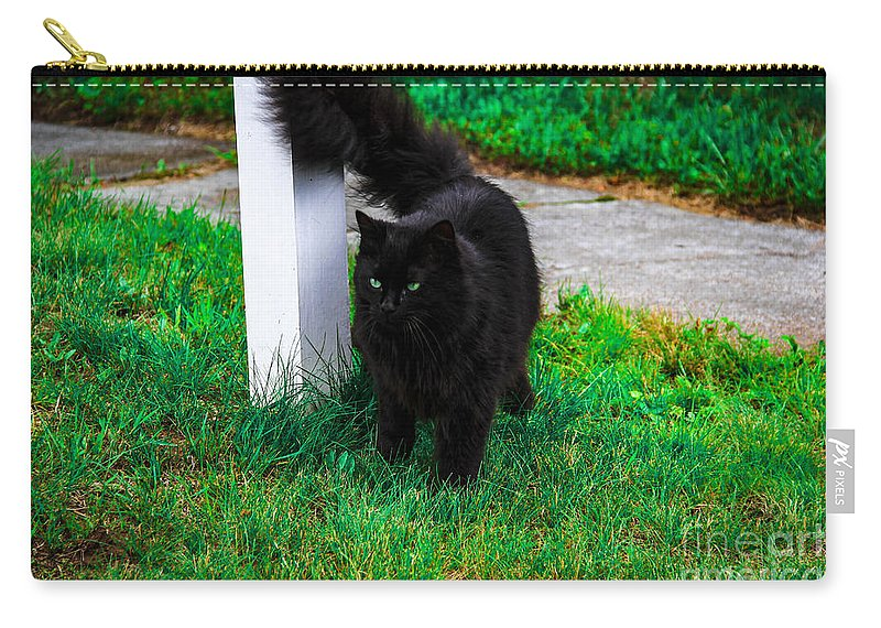 Cat Carry-all Pouch featuring the photograph Black Cat Maine by Marina McLain