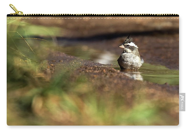 Bird Carry-all Pouch featuring the photograph Black-crested Finch by Pablo Rodriguez Merkel