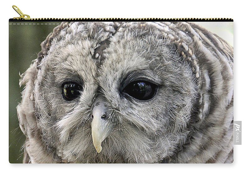Beak Carry-all Pouch featuring the photograph Black Eye Owl by Bob Slitzan