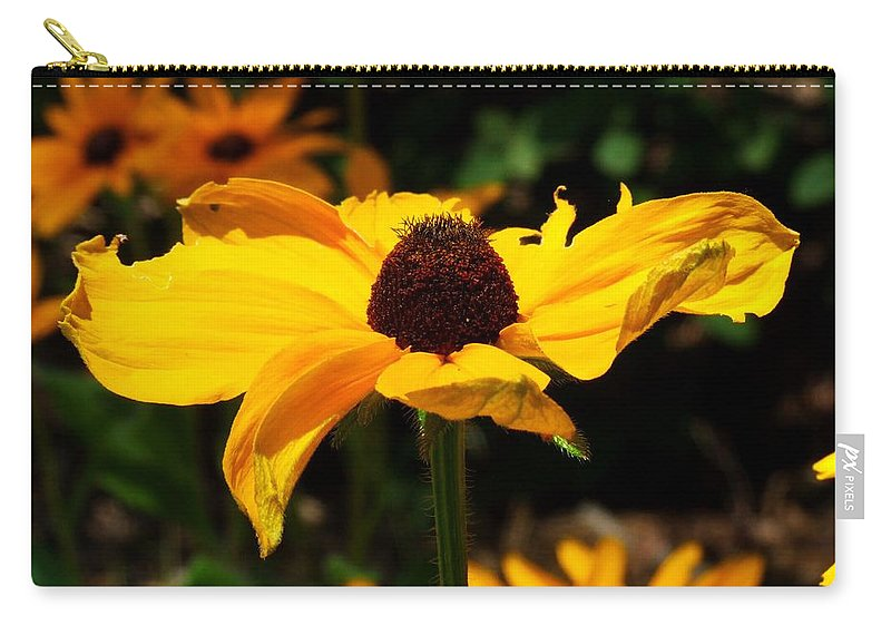 Black-eyed Susan Carry-all Pouch featuring the photograph Black-eyed Susan by Michiale Schneider