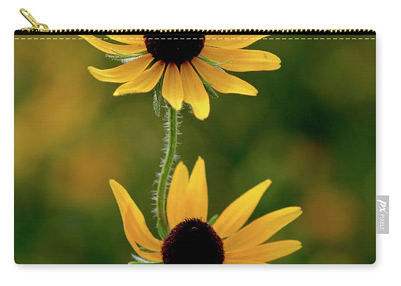 Black Eyed Susans Carry-all Pouch featuring the photograph Black Eyed Susans 3276 H_2 by Steven Ward
