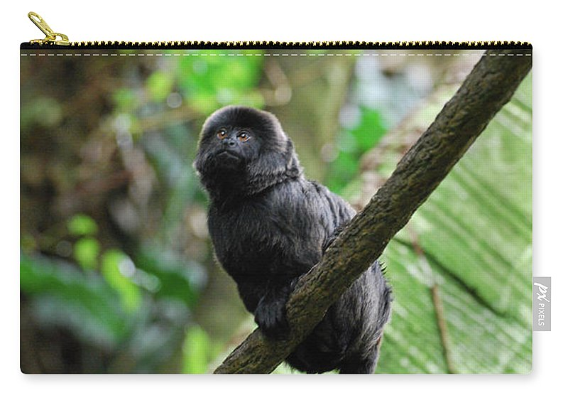 Goeldi Carry-all Pouch featuring the photograph Black Goeldi's Marmoset Sitting On The Vine by DejaVu Designs