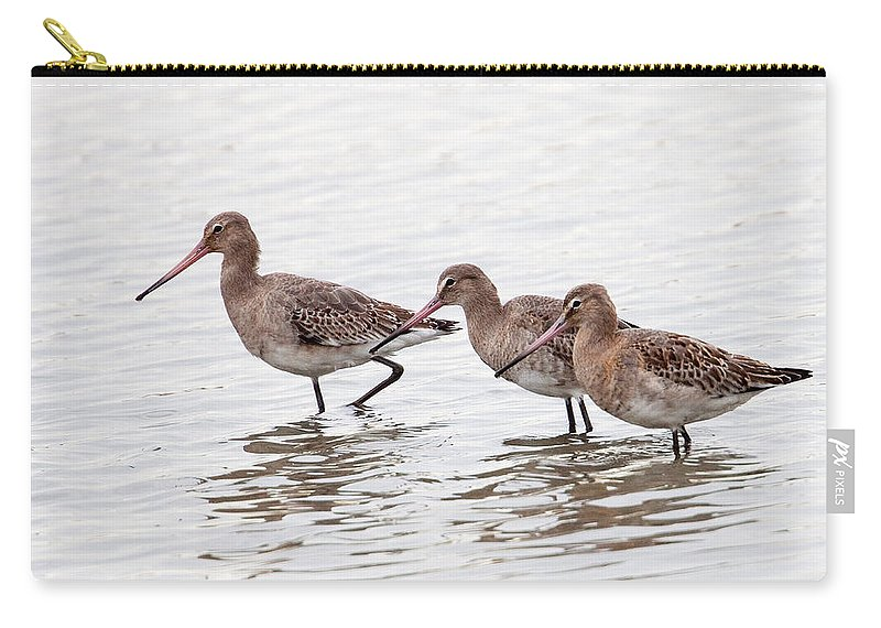 Godwit Carry-all Pouch featuring the photograph Black-tailed Godwits by Bob Kemp