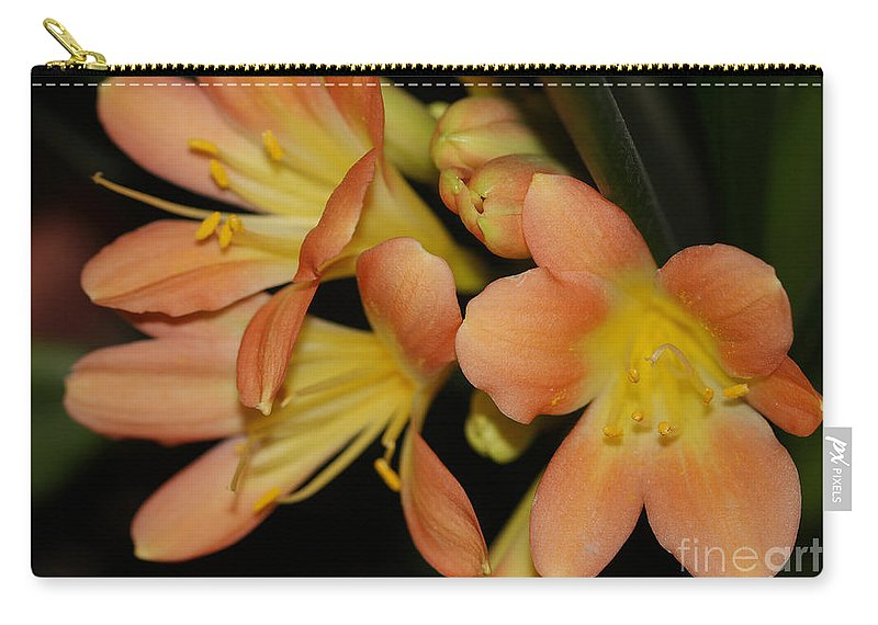 Flowers Carry-all Pouch featuring the photograph Blast Of Sunshine by Deborah Benoit