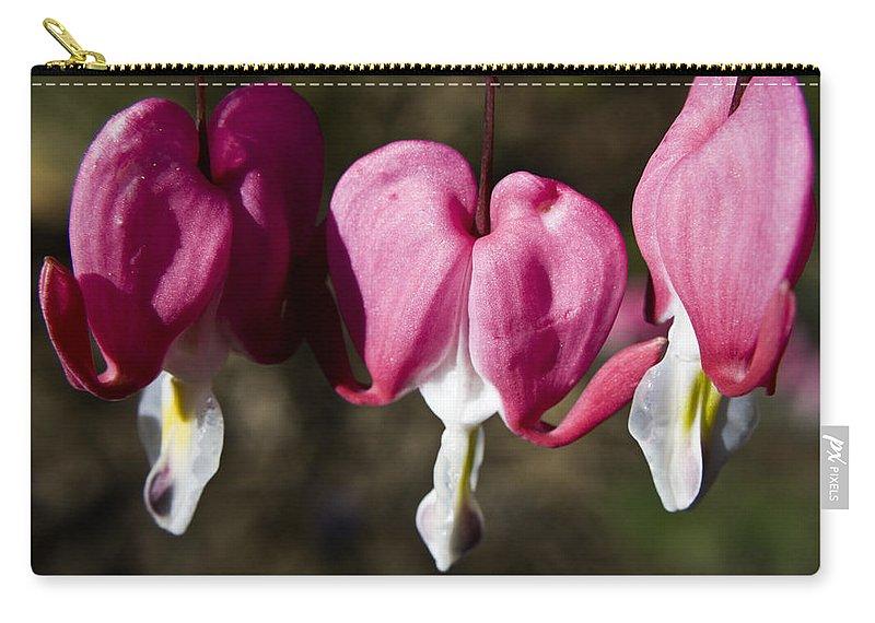 Bleeding Carry-all Pouch featuring the photograph Bleeding Heart by Teresa Mucha