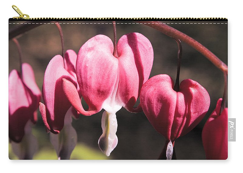 Bleeding Carry-all Pouch featuring the photograph Bleeding Hearts by Teresa Mucha