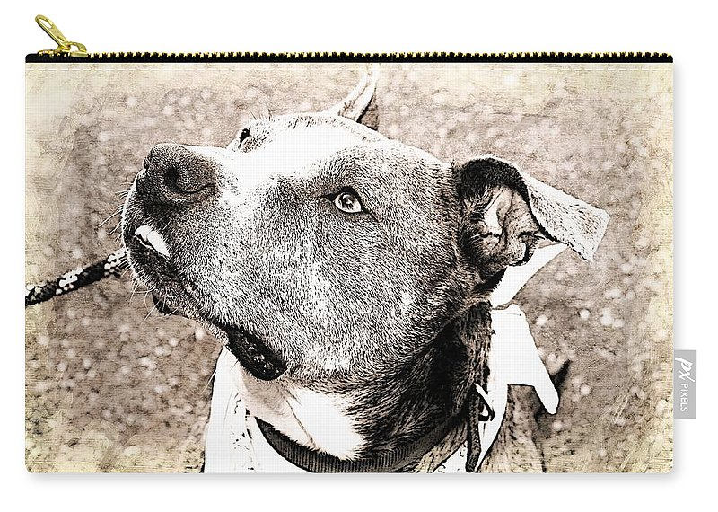 Dog Carry-all Pouch featuring the photograph Blizzard by Joyce Baldassarre