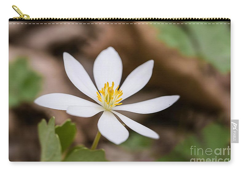Bloodroot Carry-all Pouch featuring the photograph Bloodroot Wildflower by Nikki Vig