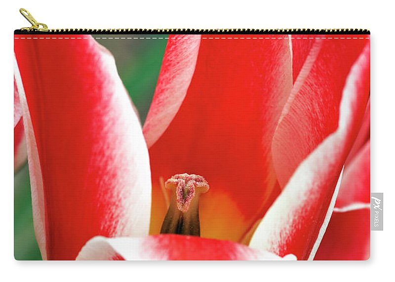 Flower Carry-all Pouch featuring the photograph Bloom Of The Tulip by Michal Boubin