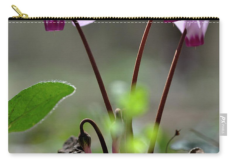 Lachish Carry-all Pouch featuring the photograph Blossom Of Cyclamens by Dubi Roman