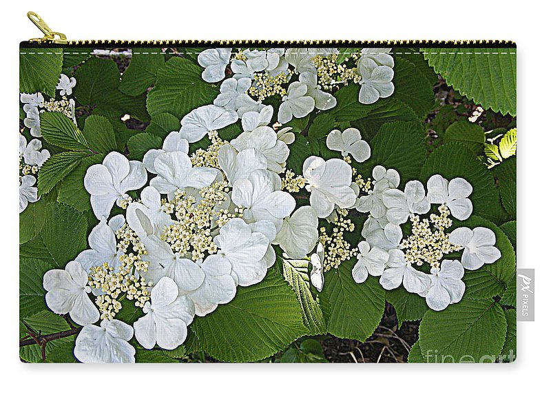 Photography Carry-all Pouch featuring the photograph Blossom Sunbath by Nancy Kane Chapman